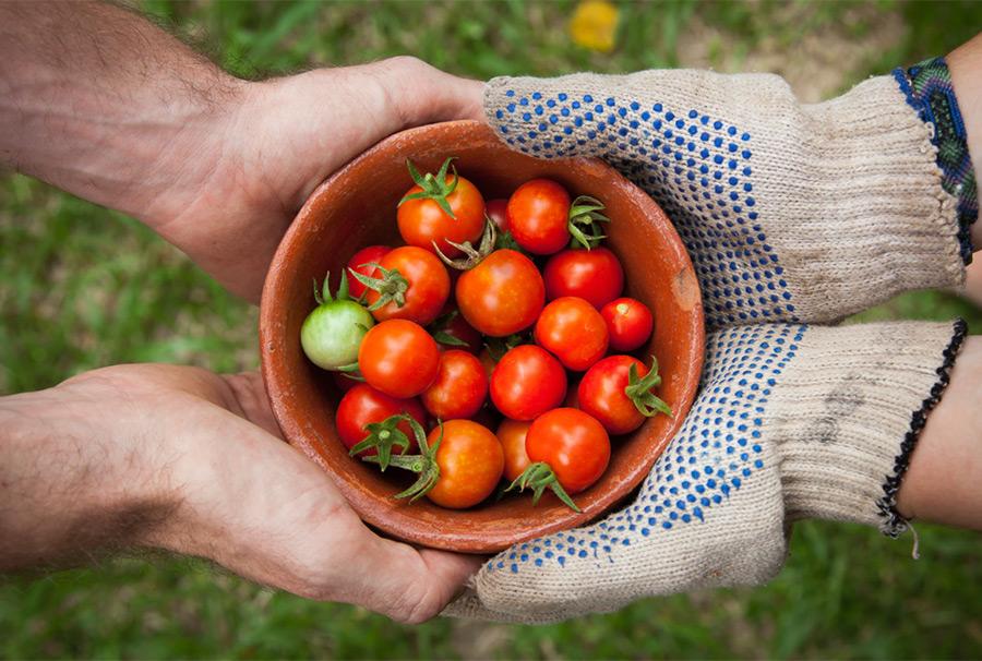 トマトを食べるとハゲる