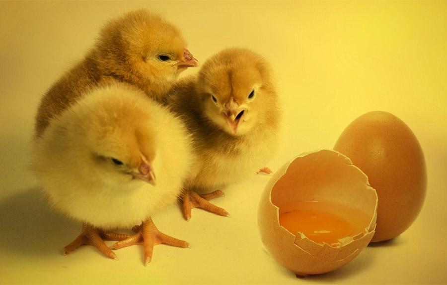 【ハゲ速報】溶き卵を頭皮に塗れば髪が生えると発表される!!!【何度目だハゲ】