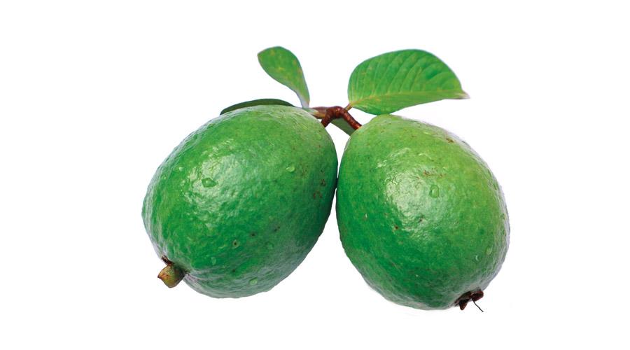 【ハゲ速報】グアバの葉の煮汁を頭皮に塗布すれば髪が生えると発表される!!!【何度目だハゲ】
